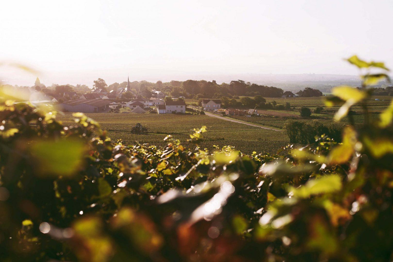 Week end en Champagne : dégustation de vins, repas gastronomiques et balades à vélo !
