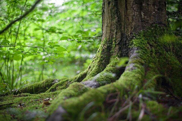 Passez un week end près de Paris en forêt !