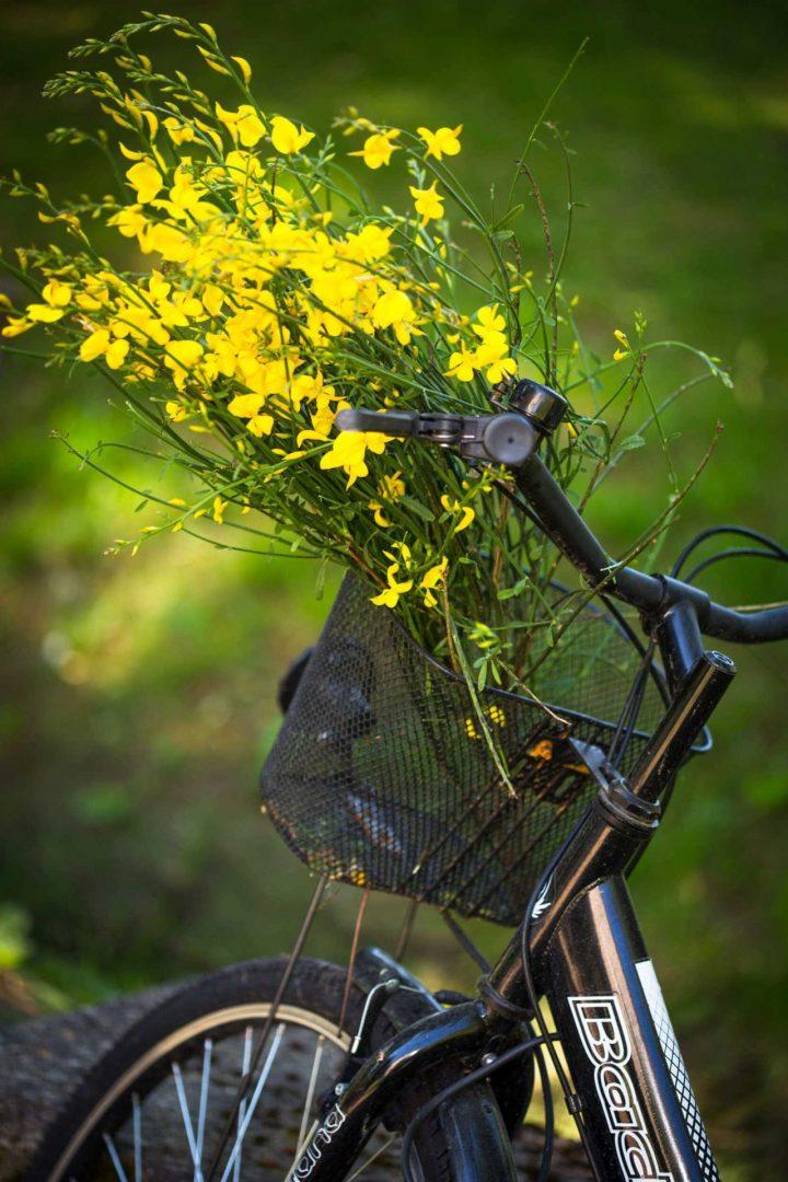 Campagne st lazare Vélo après la promenade à Forcalquier