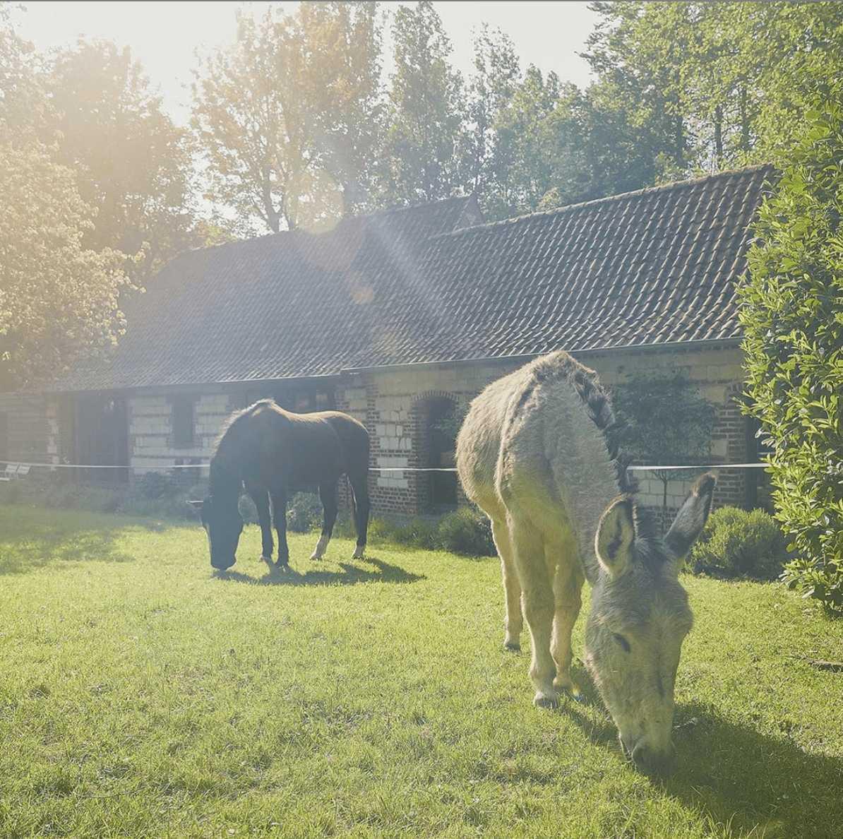 âne jardin un matin dans les bois