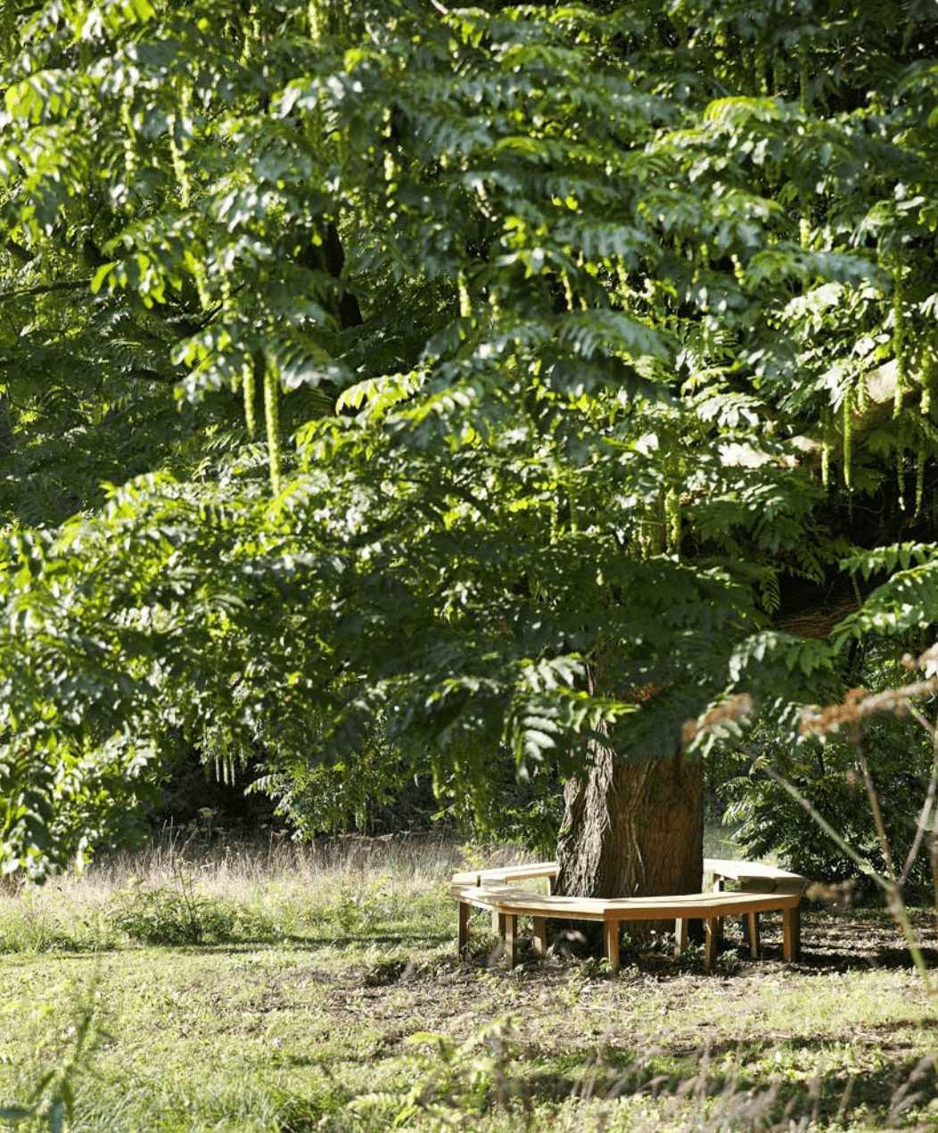 jardin espace refuge un matin dans les bois