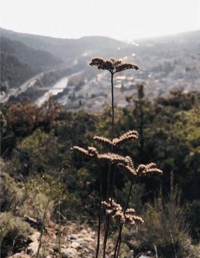 vue collines drome colchique