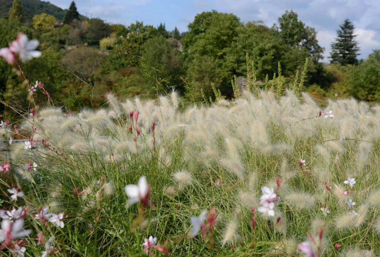 mas saribou jardin champetre fleuri